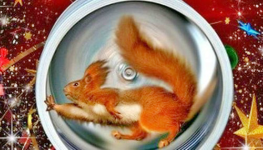 squirrelinthewheel